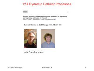 V14 Dynamic Cellular Processes
