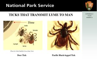 TICKS THAT TRANSMIT LYME TO MAN