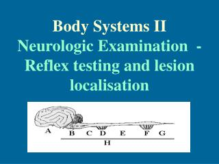 Body Systems II Neurologic Examination  - Reflex testing and lesion localisation