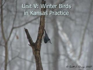 Unit V: Winter Birds in Kansas Practice