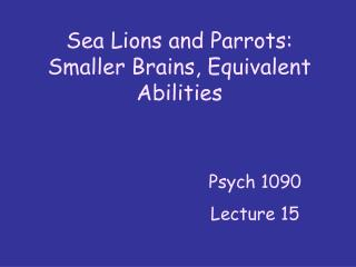 Sea Lions and Parrots: Smaller Brains, Equivalent Abilities