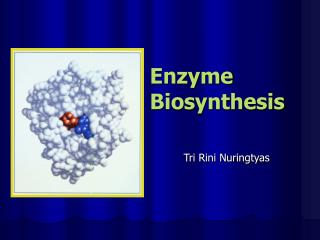 Enzyme Biosynthesis