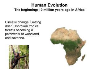 Human Evolution The beginning: 10 million years ago in Africa