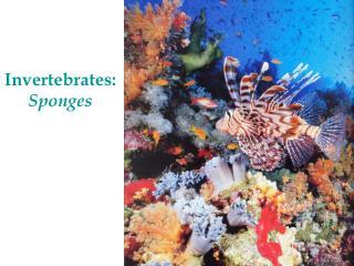 Invertebrates:  Sponges