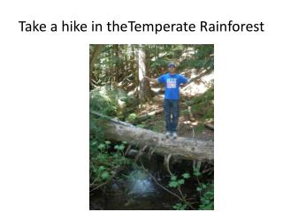 Take a hike in  theTemperate  Rainforest