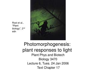 Photomorphogenesis:  plant responses to light