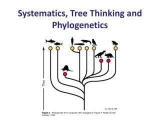 Systematics, Tree Thinking and  Phylogenetics