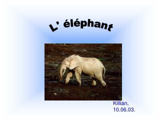 L' éléphant