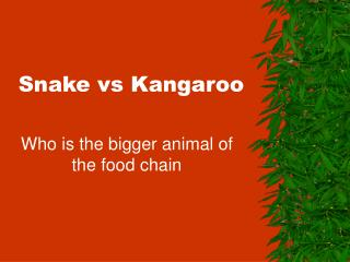 Snake vs Kangaroo