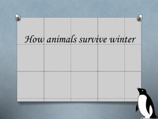 How animals survive winter
