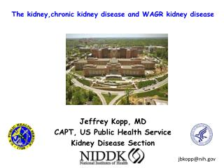 The  kidney,chronic  kidney disease and WAGR kidney disease
