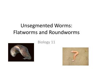 Unsegmented  Worms: Flatworms and Roundworms