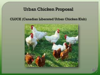 Urban Chicken Proposal CLUCK (Canadian Liberated Urban Chicken  Klub )
