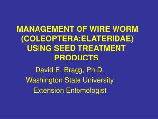 MANAGEMENT OF WIRE WORM  COLEOPTERA:ELATERIDAE USING SEED TREATMENT PRODUCTS