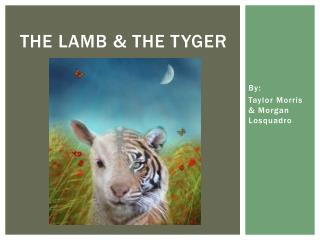 THE LAMB & THE TYGER
