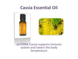 Find Cassia Essential Oil at doTERRA