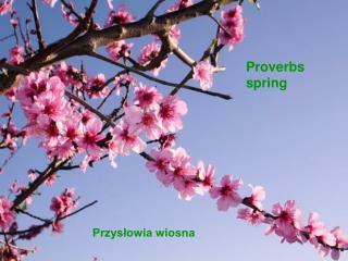 Przysłowia wiosna