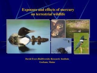 Exposure and effects of mercury  on terrestrial wildlife