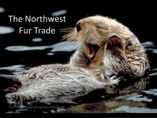 The Northwest Fur Trade