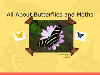 All About  Butterflies and Moths