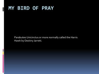 My Bird of Pray