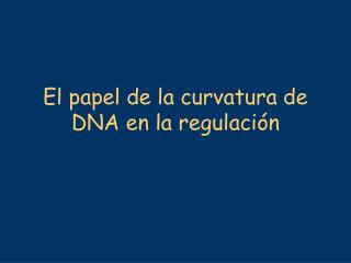 El papel de la curvatura de DNA en la regulación