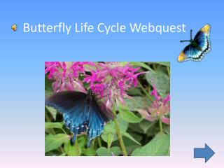 Butterfly Life Cycle  Webquest