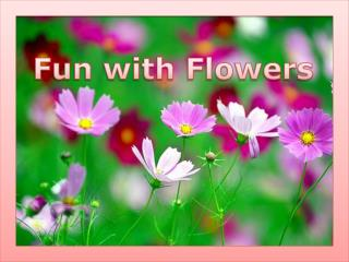 Fun with Flowers