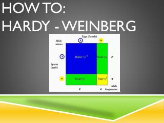How to: Hardy - Weinberg