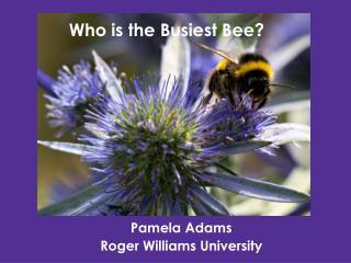 Pamela Adams Roger Williams University