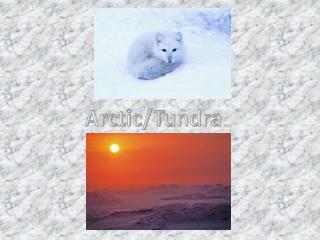 Arctic/Tundra