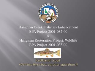 Redband  trout  ( Onchorhynchus mykiss gairdneri )