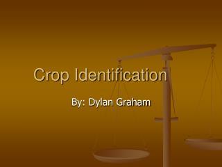 Crop Identification