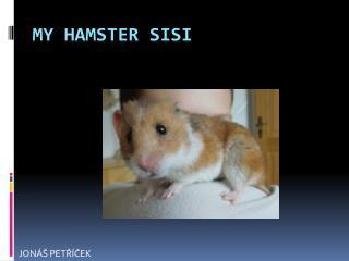 MY HAMSTER SISI