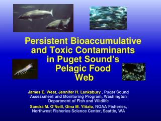 Persistent Bioaccumulative  and Toxic Contaminants  in Puget Sound's  Pelagic Food  Web
