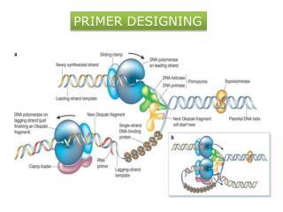 PRIMER DESIGNING
