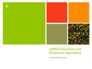 miRNA Discovery and Prediction  Algorithms