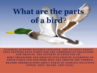 What are the parts of a bird ?