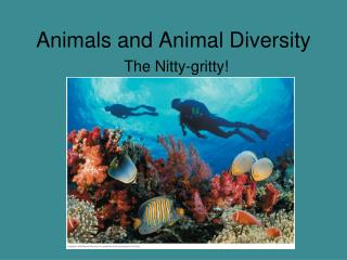 Animals and Animal Diversity