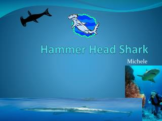 Hammer Head Shark
