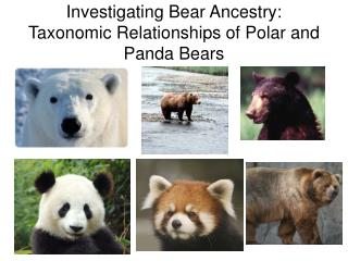 Investigating Bear Ancestry: Taxonomic Relationships of Polar and Panda Bears