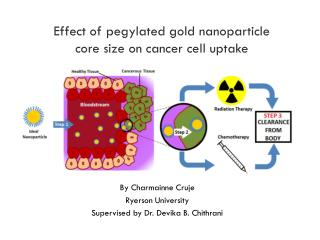 Effect of  pegylated  gold  nanoparticle core  size on cancer cell  uptake