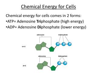 Chemical Energy for Cells