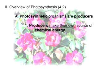II. Overview of Photosynthesis (4.2) 	A.  Photosynthetic  organisms are  producers