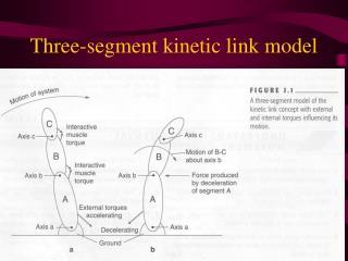 Three-segment kinetic link model