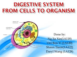 Digestive System From Cells to Organism