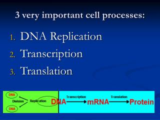 3 very important cell processes: