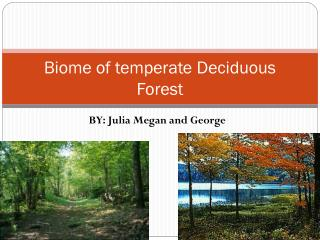 Biome of temperate Deciduous Forest