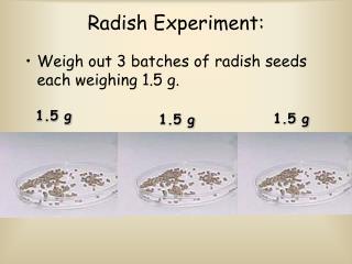 Radish Experiment: