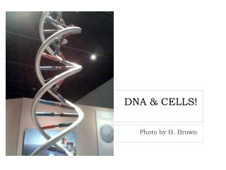 DNA & CELLS!